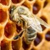 Le manoir des abeilles (Maison Peltier)